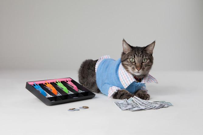 regnskapsforer-katt